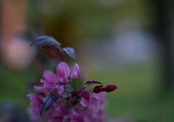 Real World Bokeh-12