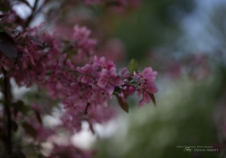 Real World Bokeh-14