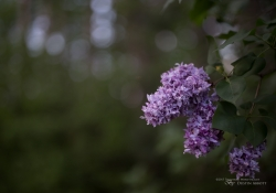 Real World Bokeh-19