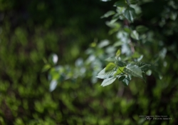 Real World Bokeh-3