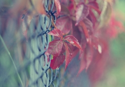 Fall's Fence Friday