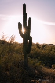 Arizona Landscapes-10