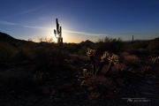 Arizona Landscapes-11