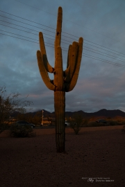 Arizona Landscapes-28