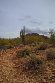 Arizona Landscapes-32