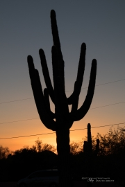 Arizona Landscapes-4