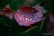 Autumn Rains