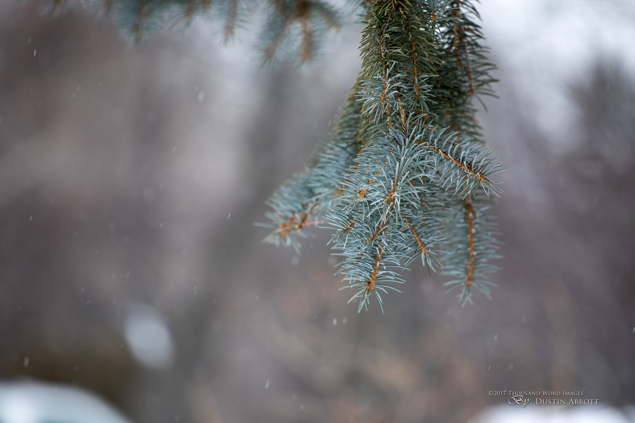 Winter Bokeh-2