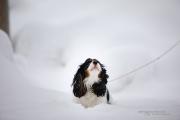 Doggy-3