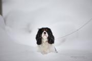 Doggy-4