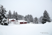 Another Snowstorm-3