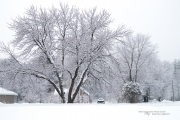 Another Snowstorm-2