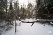Winter Walk-5