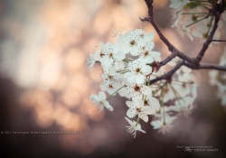 Bokeh Blossoms