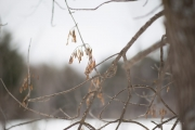 Wintry Mood-4