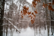 Winter Walk-6