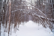 Winter Walk-9