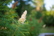 Morning-Bokeh-4