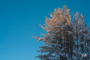 Winter-Light-2