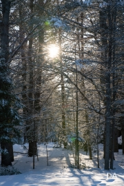 Winter-Light-4
