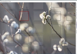 Focus and Recompose