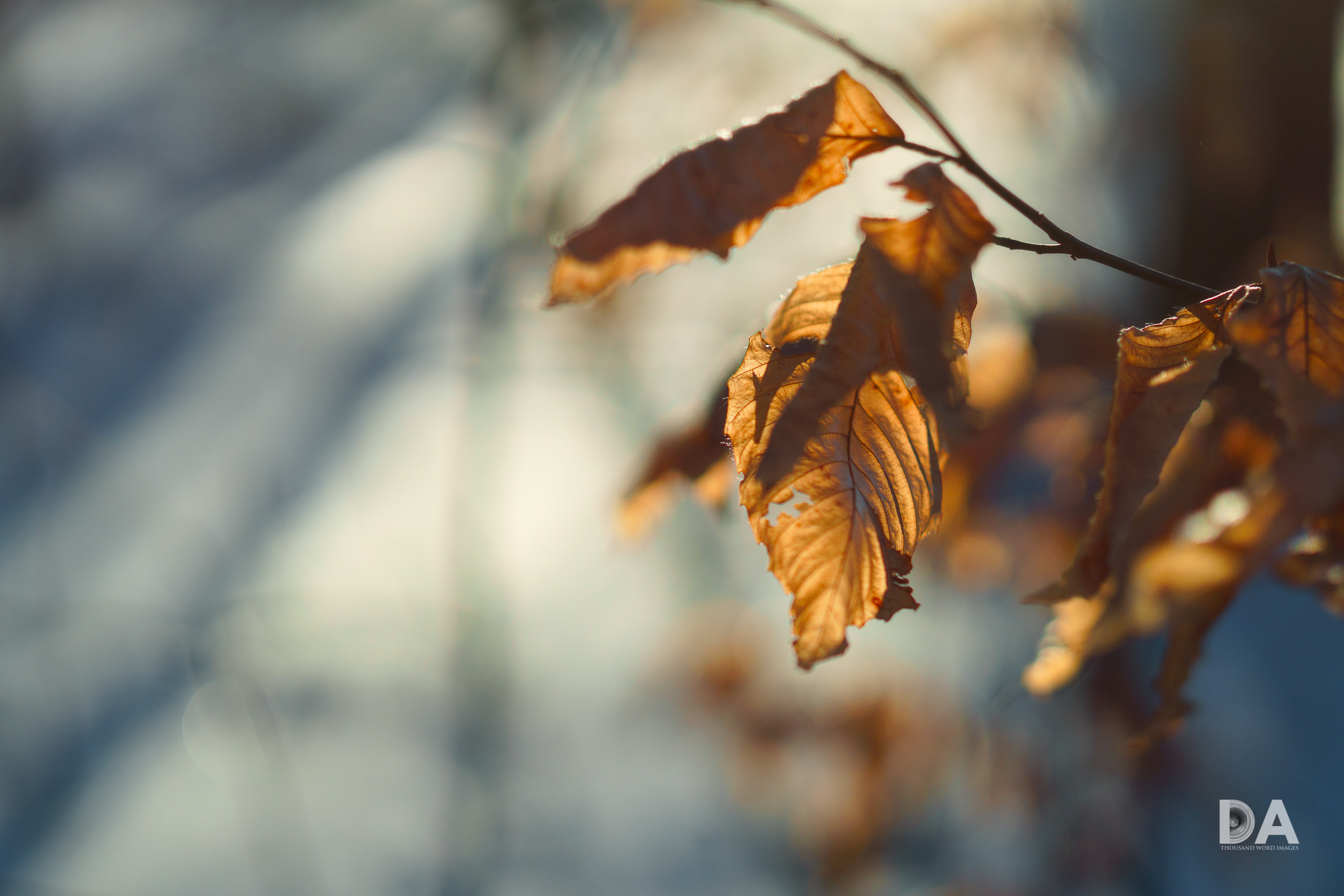 Warm Leaves in a Cold Winter