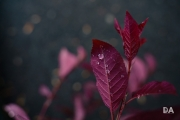 After the Rain-4
