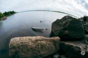 TTFish-Samples-32