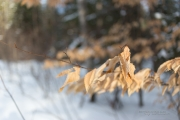 Winter Walk-10
