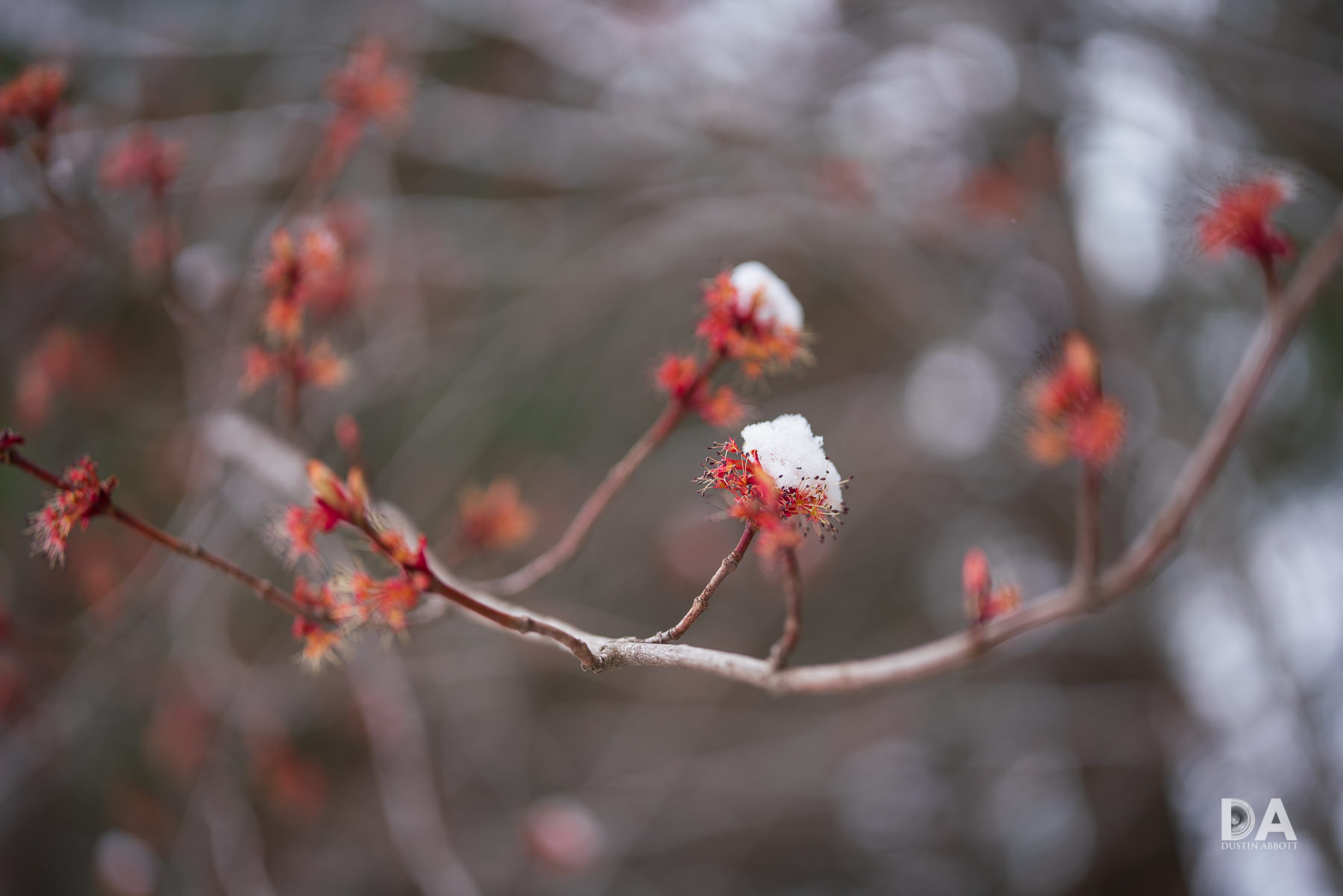 32-Spring-and-Winter