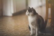 Counting Whiskers (Milvus 85mm f/1.4)