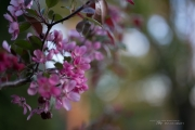 Real World Bokeh-11