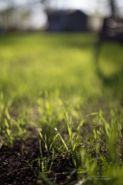 Real World Bokeh-2