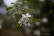Real World Bokeh-5