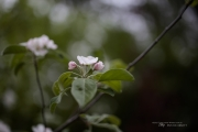 Real World Bokeh-6