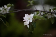 Real World Bokeh-7