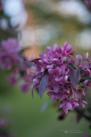 Real World Bokeh-8