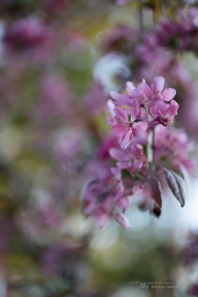 Real World Bokeh-9