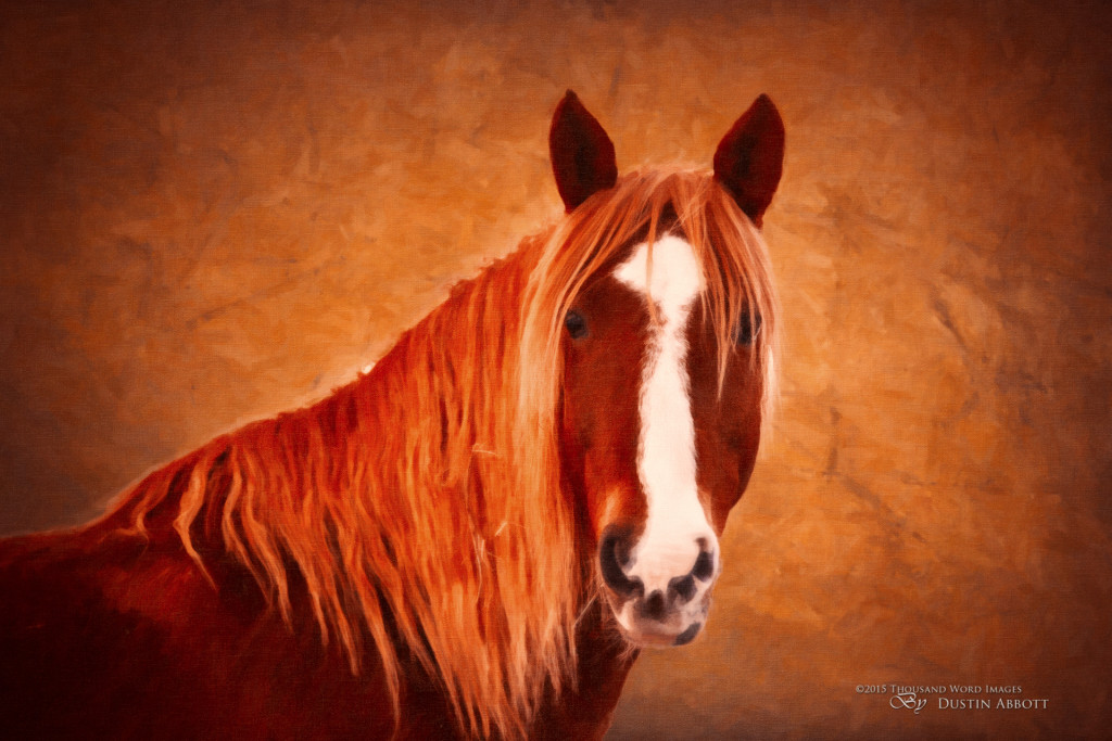 12 Horse Portrait Final Original Ratio